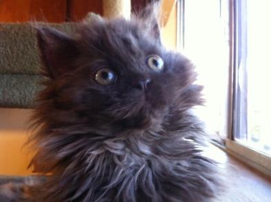 Susens kitten
