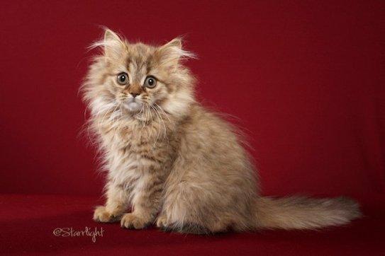 Beyonce kitten photo