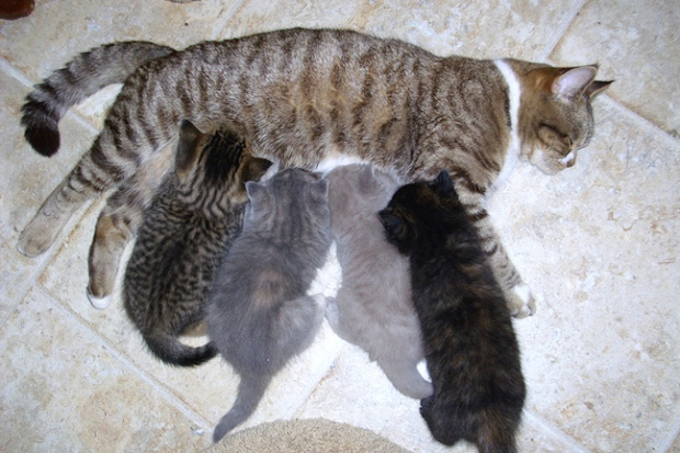 smitten nursing kittens