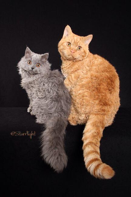 Kian and Edward